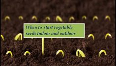 When to plant plants indoor and outdoor. A fairly useful bit of knowledge right here :)