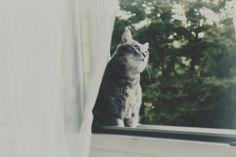 Lovely cat. Leo<3.