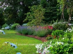 A summer perennial garden design in full bloom. Lavender. Echinacea, Shasta Daysies...