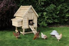 Kindly care for your chickens with this comfortable, quality chicken coop. The Rowlinson x x Small Chicken Coop boasts a host of chicken friendly features such as internal perches, a double compartment nesting box and an access ram . Chicken Coop Pallets, Diy Chicken Coop Plans, Portable Chicken Coop, Backyard Chicken Coops, Building A Chicken Coop, Chickens Backyard, Chicken Coop Designs, Small Chicken Coops, Best Chicken Coop