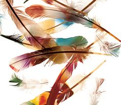 feathers - can i paint this?