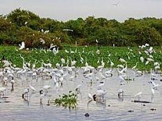 Cuiaba, Pantanal Wetlands Brazil Wildlife Watching