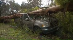 Some poor bastard in Sacramento was heading home from college only to find his Ford F-150 in the parking lot wearing an enormous Eucalyptus tree as a hat. Fox 40 News says the aforementioned bastard, named Gerogiy Karpekin, then got a ride back to his house, where he found another woody perennial plant adorning the lid of another one of his cars. This poor guy can't catch a break.