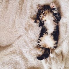 #kitty #cat #asleep
