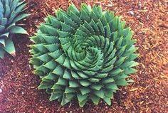 Succulent green offset by terra cotta