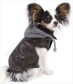 Totally cool and as hip as can be! Distressed soft faux leather dog bomber jacket is lined in warm cozy fleece. Features detachable lined fleece hoodie, real ba