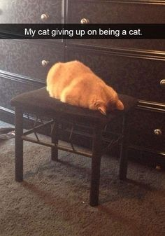 29 Cat Owners Who Put Their Cats On Blast - Gallery