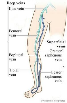 some of the leg veins we check on your ultrasound. Make an appointment for a medical vein consult. Medical Coding, Medical Science, Ultrasound School, Ultrasound Physics, Vascular Ultrasound, Varicose Veins Treatment, Medical Anatomy, Nursing Notes, Nursing