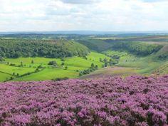 Yorkshire Moors