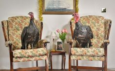 These turkeys have avoided the dinner table and instead will sit in front of the TV this Christmas - as they star in new review show, 'Gobblebox.' The new show is a spin on Friday night telly favourite - Gogglebox. Just like the well-loved stars from Gogglebox do, 10 charismatic turkeys will sit on the sofa and share their bird's eye view of what's on the box. TalkTalk is helping viewers across the country enjoy the best of Christmas telly with a brand new TV review show called ëGobbleboxí…