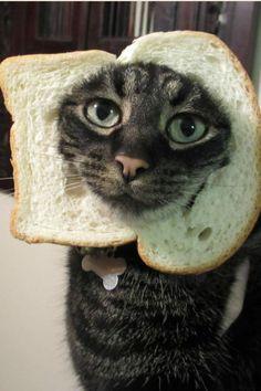 J'adore le pain de mie!