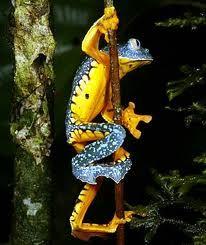 Go Deep in the Amazon Rainforest