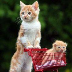 Je vais faire les courses!