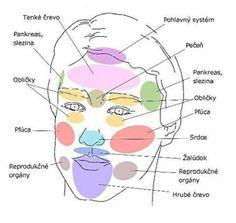 Obličej jako zrcadlo našich orgánů