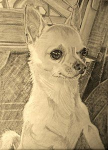 Dog Pencil Sketch Drawing - Chihuahua by Linda Prediger Chihuahua Drawing, Chihuahua Puppies, Chihuahuas, Chihuahua Tattoo, Animal Sketches, Animal Drawings, Dog Sketches, Puppy Drawing Easy, Chiweenie Dogs