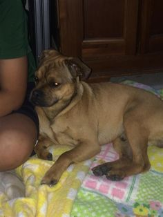Found Dog - Mix - Holly Springs, GA, United States 30188 on April 21, 2016 (18:00 PM)