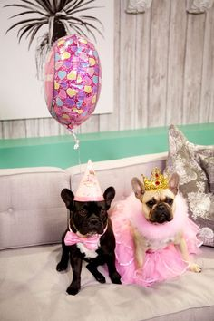 cheap for discount b89e7 f86d0 Birthday Party for Bob the French Bulldog and Friend ❤ httpswww