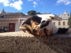 Cat Sanctuary in Rome, Italy