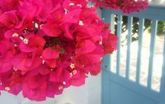 Top 5 things to see and do in Paros Mykonos, Santorini, Paros, 5 Things, Athens, Blue And White, Top, Beautiful, Travel