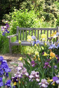 Iris garden with a bench