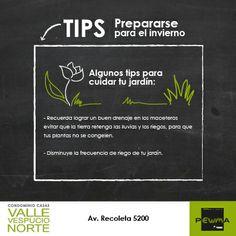Prepara tus plantas para el invierno