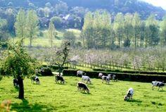 musée, jardin et ferme à visiter au Pays du camembert Dolores Park, France, Mountains, Nature, Travel, Gardens, Farm Gate, Vacation, Landscape