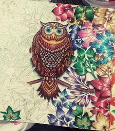 Coruja Jardim secreto floresta encantada