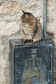 Street cat over a metalic box