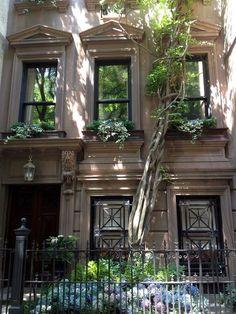 Summer Shade, New York City