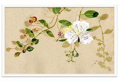 Isabelle de Borchgrave Flower, Lefkada  Soicher marin on OneKingsLane.com