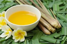Citronella Oil is extensively used in aromatherapy. Here we list the many reasons telling why and how it is useful for you.