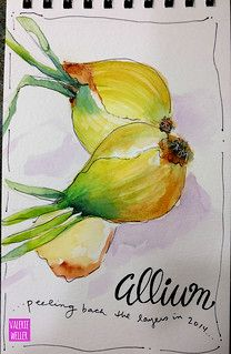 ALIUM | journal watercolor sketch | Valerie Weller | Flickr Watercolor Fruit, Watercolor Sketchbook, Watercolor Cards, Art Sketchbook, Watercolor Paintings, Botanical Illustration, Watercolor Illustration, Photomontage, Collages