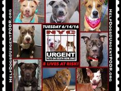 """6/14 Please Share! SUPER URGENT tap picture 8BEAUTIFUL LIVES OF DOGS TO SAVE 6/14TO BE DESTROYED STARTING 12NOON PLEASE SAVE US WE ONLY HAVE A FEW MINS / HOURS TO LIVE BEFORE WE GO TO DOGGY HEAVEN THANK YOU PLEASE REPIN AND SHARE THIS INFORMATION  TIME IS CRITICAL THANK YOU IRISH : . Please share! The shelter closes at 8pm. Go to the ACC website( http:/www.nycacc.org/PublicAtRisk.htm) ASAP to adopt a PUBLIC LIST dog (noted with a """"P"""" on their profile) and/or work with a rescue group if you…"""