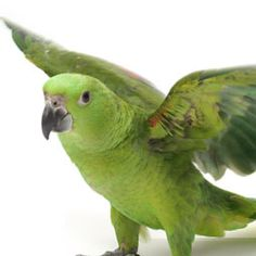 Get Your Amazon Parrot To Exercise | BirdTalk Magazine