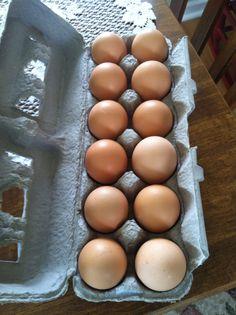 My first dozen eggs from my Rhode Island Reds. :)