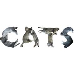Cats text ❤ liked on Polyvore featuring text, cats, filler, words, animals, quotes, phrase and saying