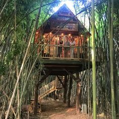 Treehouse in Atlanta, United States. Gorgeous tree house, built with antique house parts & natural materials, outfitted with luxuries: memory foam beds, power, AC/heat, marble bath.  It's tucked in a bamboo forest, in an alpaca habitat, in Atlanta, on a working farm.  It's safe to sa...
