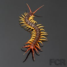 First Choice Reptiles - Vietnamese Giant Centipede For Sale, $25.00 (http://www.firstchoicereptiles.com/vietnamese-giant-centipede-for-sale/)