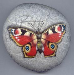 Peacock butterfly | Rock painting art by Roberto Rizzo
