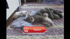 😸 crazy cats videos funny cat clips Crazy Funny Cat And Dog Video Funny Animals Video 🐶 Top FUNNY animals Compilation Funny Cats and Dogs…