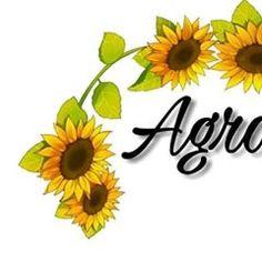 Instagram Blog, Flower Photos, Disney Frozen, Inspiration, Sunflowers, Sunshine, Wallpapers, Collections, Nature