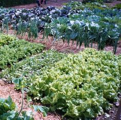 Planning a Fall Vegetable Garden: Vegetables to Grow in a Fall Garden with planting dates by area   gardening.about.com