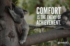 """10 Sentences that Can Change Your Life - """"Comfort is the enemy of achievement. Change Quotes, Quotes To Live By, Life Quotes, Math Quotes, Life Sayings, Career Quotes, Inspire Quotes, Wisdom Quotes, Success Quotes"""