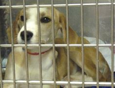 37645 Collie Mix • Young • Female • Medium ,The Animal Shelter Society Inc. Zanesville, OH