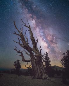 13 тыс. отметок «Нравится», 65 комментариев — Milky Way Chasers (@milkywaychasers) в Instagram: «Ian Chen at the Ancient Bristlecone Forest — REPOST: @ianchen0 from…»
