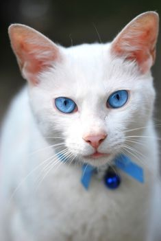 Hi! I'm Snowstorm, I'm a she cat from Thorn Clan, I'm shy, I Might not talk much, mate is Darkness...