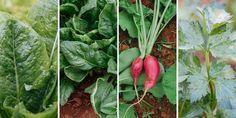 🥦🥕🧅 Αν έχουμε συνηθίσει να φυτεύουμε λαχανικά μόνο την περίοδο της άνοιξης, ίσως είναι καιρός να αναθεωρήσουμε τις καλλιεργητικές μας συνήθειες. Η φθινοπωρινή καλλιέργεια περιλαμβάνει μοναδικά λαχανικά με υψηλή διατροφική αξία που μπορούμε εύκολα να καλλιεργήσουμε στον κήπο και σε γλάστρα με ελάχιστη περιποίηση.