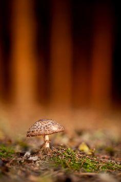 'Mushroom' by Georg Essl on 500px