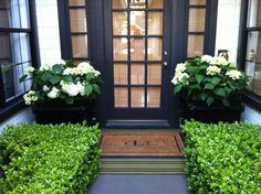 love the boxwood, hydrangea and black trim
