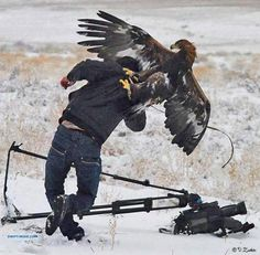 Do eagles hunt humans? I believe that it could happened, given the kind of large prey that Golden Eagles hunt. Funny Animal Pictures, More Pictures, Funny Animals, Cute Animals, Funny Birds, Animal Pics, Family Pictures, Wow Photo, Photo Animaliere